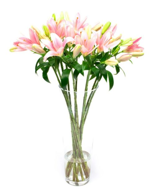 Letterbox Subscription Flowers -Pale Pink Lilies Flowers Delivered Weekly