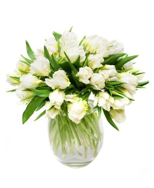 Letterbox Flowers Delivered - Double White Tulips Flowers Delivered Weekly