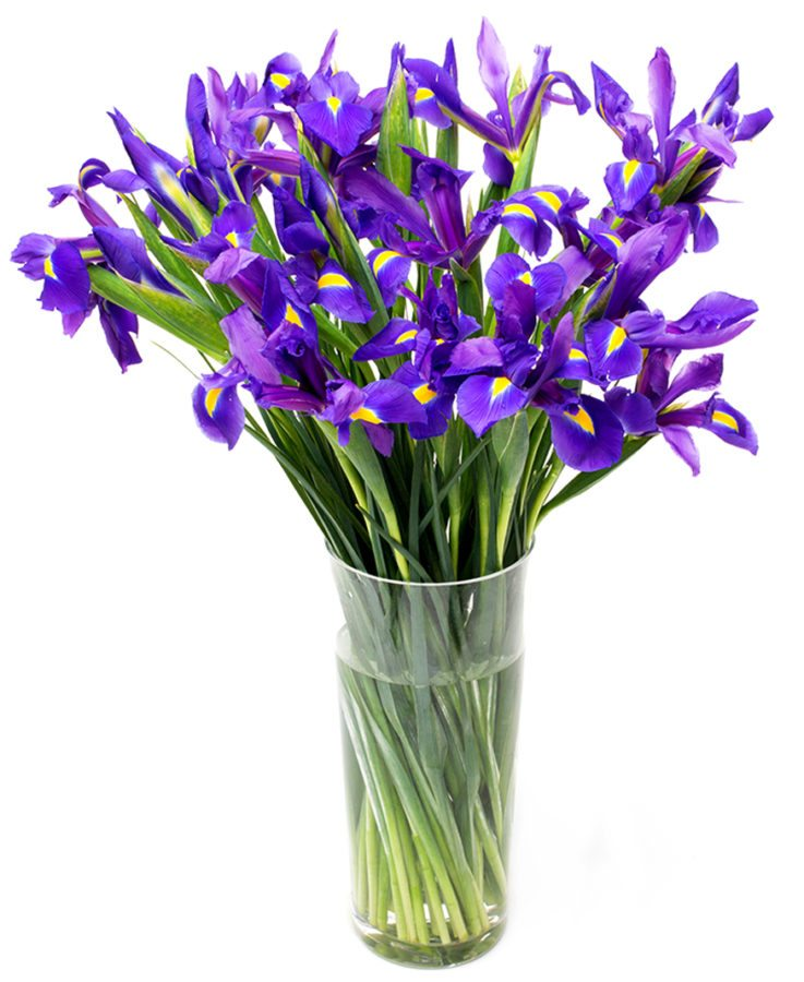 Letterbox Subscription Flowers - Purple or Blue Iris Flowers Delivered Weekly