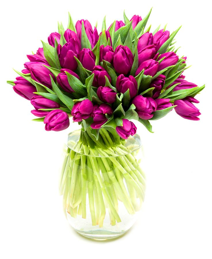 Subscription Flower Delivery - Purple Tulips Flowers Delivered Weekly