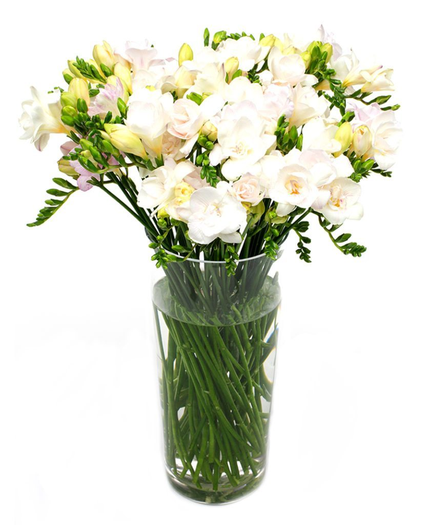 Letterbox Flowers - Cream Freesias Flowers Delivered Weekly