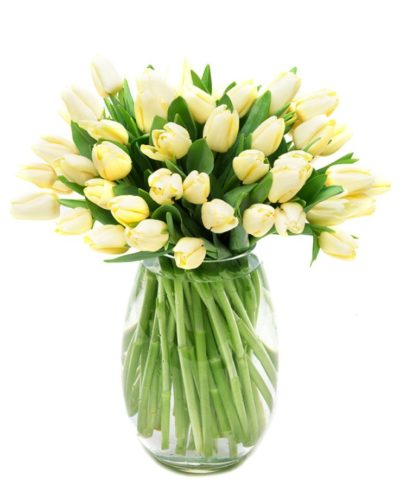 Weekly Flower Delivery – cream