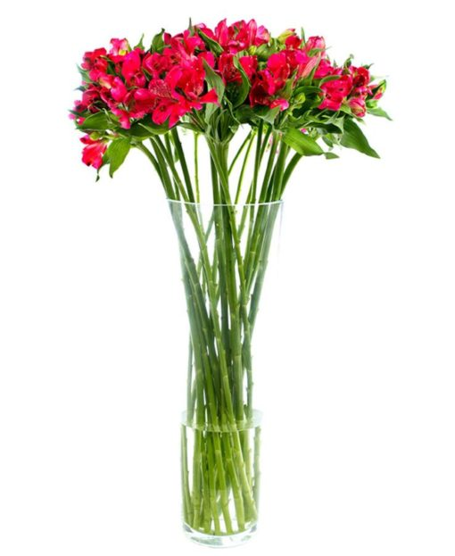 Fortnightly Flower Delivery - alstroemeria red