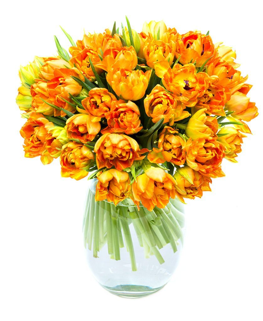 Double Orange Tulips for the Home or Office