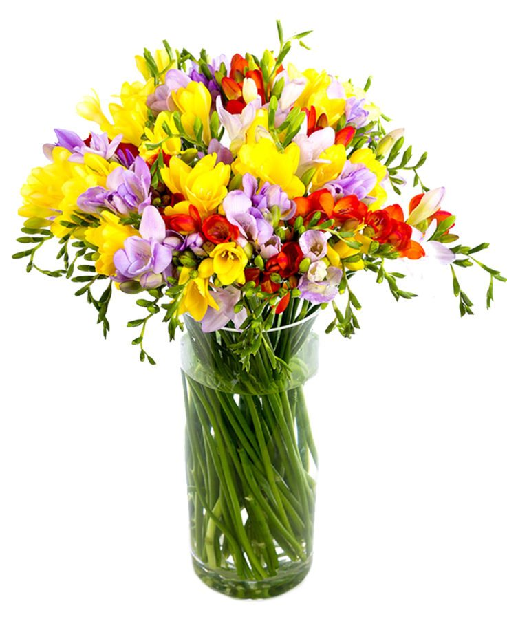 Frequent Flowers - Freesias