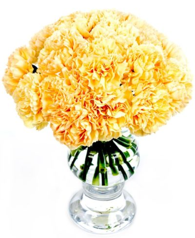 Fortnightly Flower Delivery - Peach Carnations