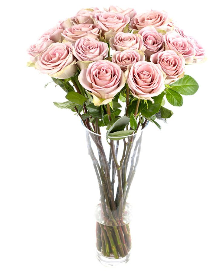 Weekly Flower Delivery –Roses - Long Stemmed - Amnesia