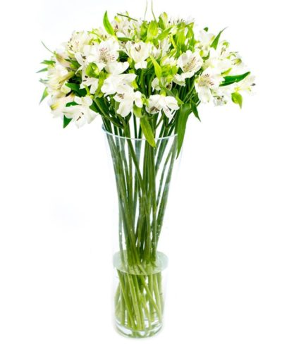 Letterbox Flower Delivery - White Alstroemeria Flowers Delivered