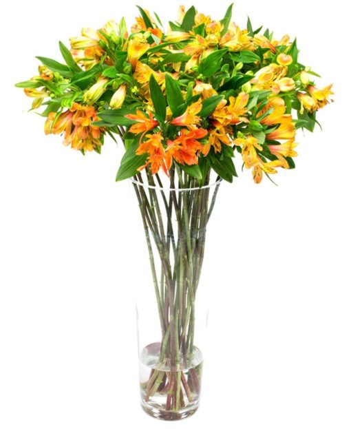 Flower Subscription - Alstroemeria - Orange