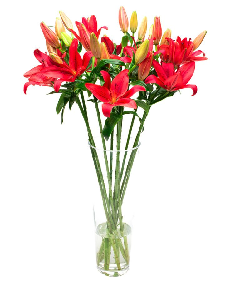 Asiatic Lilies - Red
